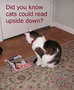 did you know cats could read upside down?